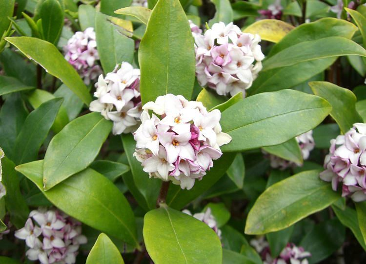 Top 28 shrubs that bloom all year top 10 flowers that bloom all year plants shrubs that - Flowers that bloom all year round ...